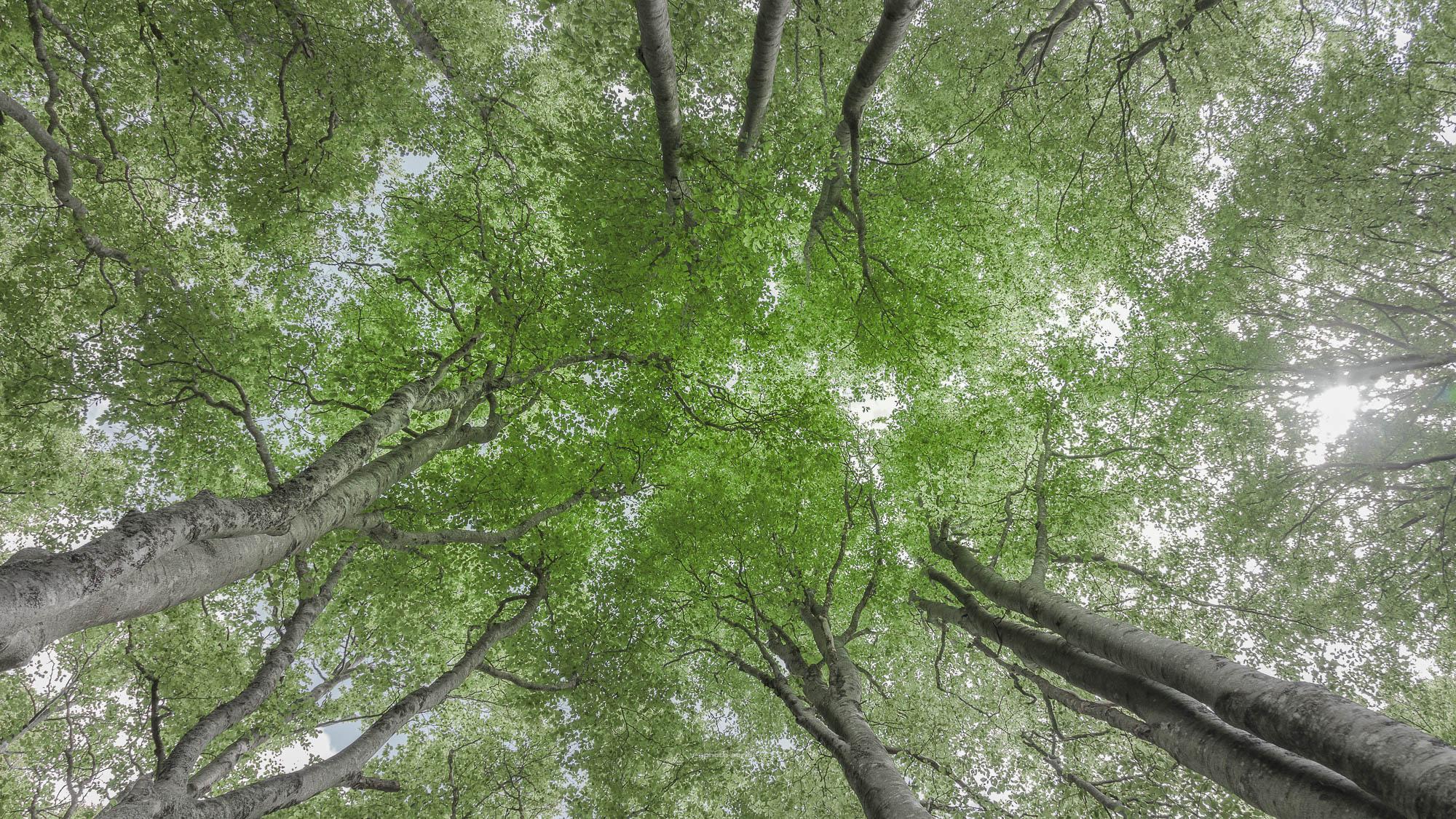 NATURE-PSStd_180603-5446_Forêt