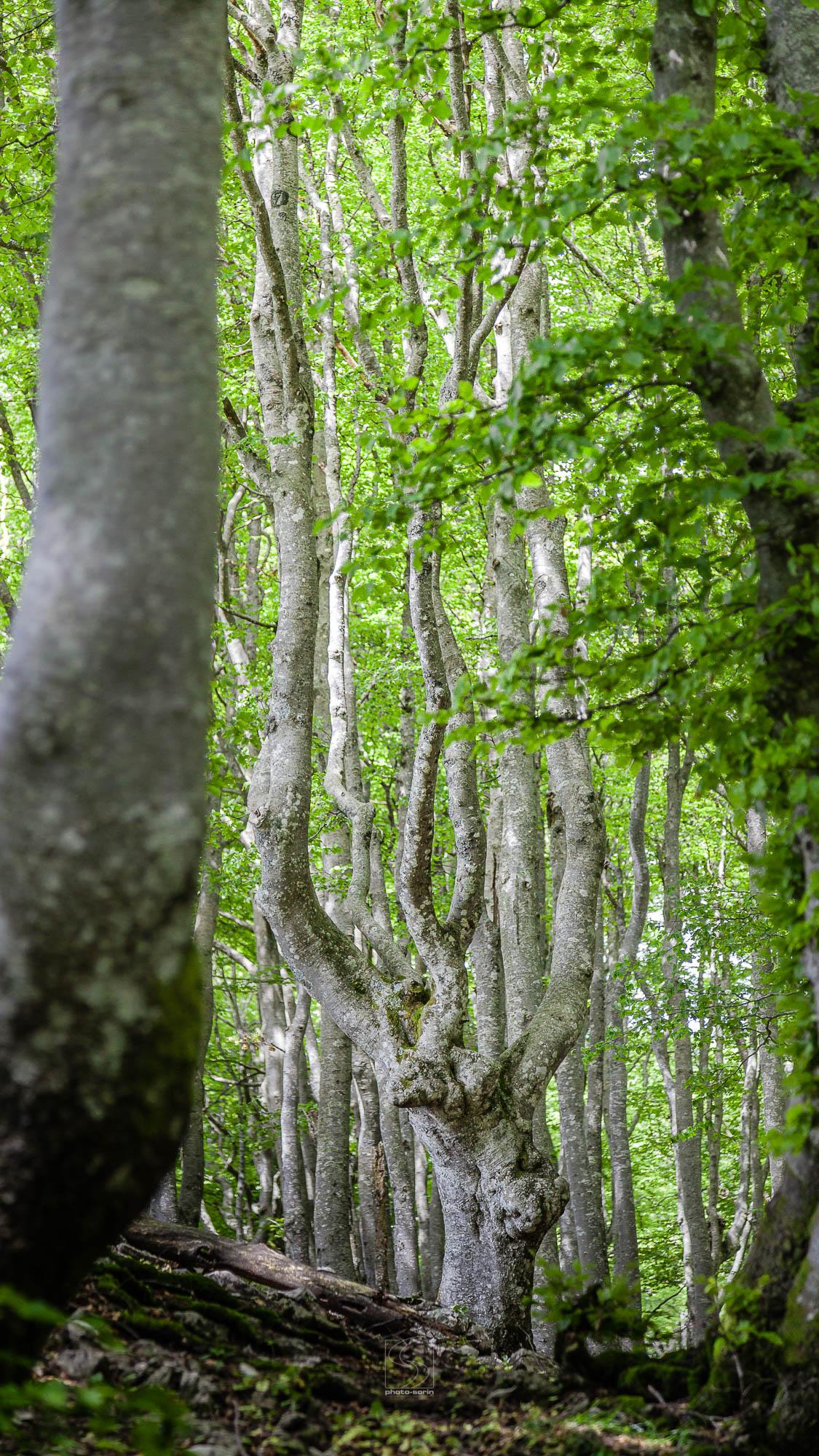 NATURE-PSStd_180603-5450_Forêt-de-Hetres