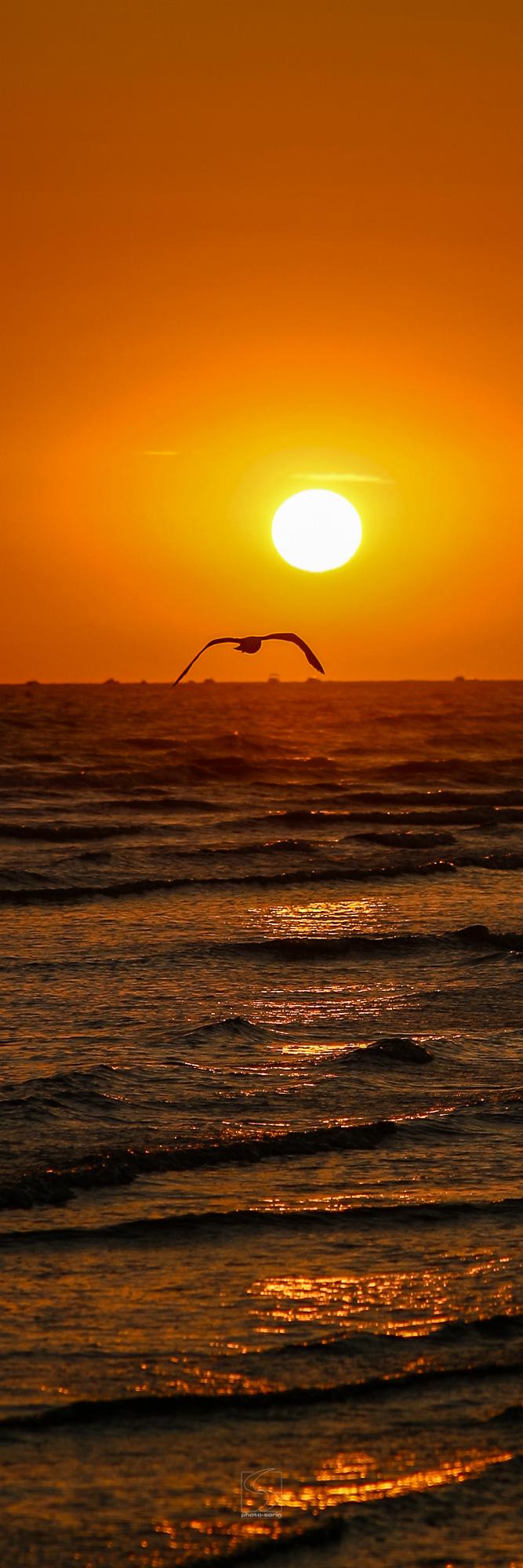 PAYSAGE-PSAL_060804-015_Coucher-de-soleil-de-soleil